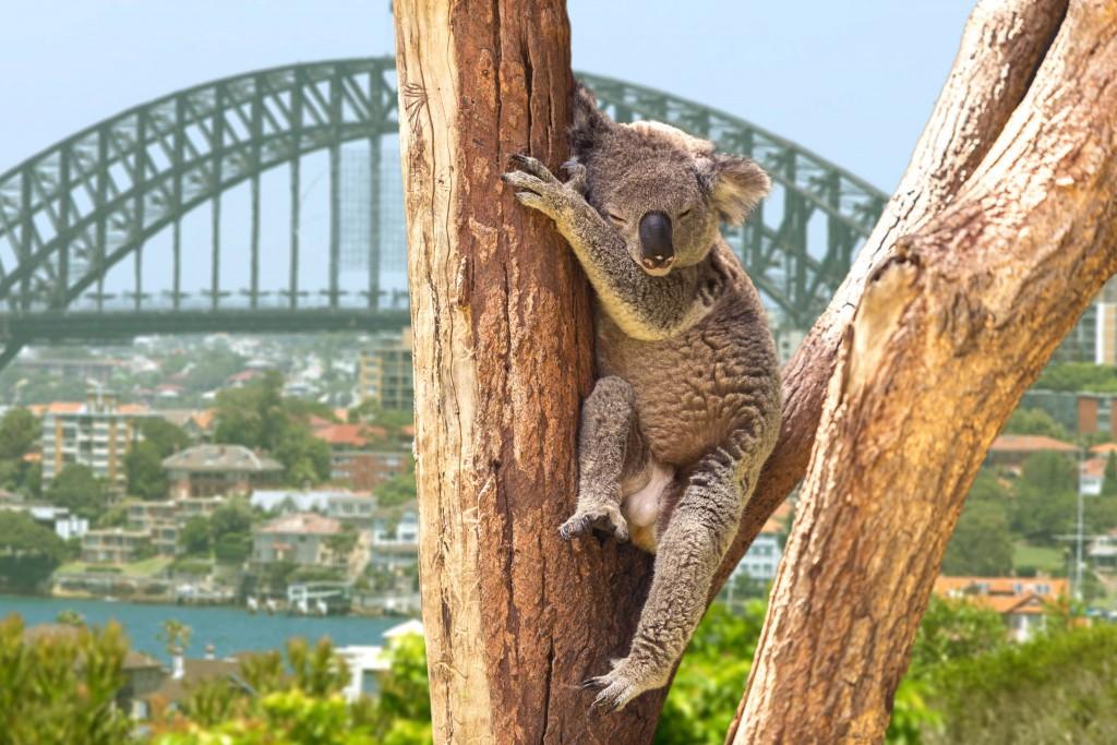Australia Bucket List 2