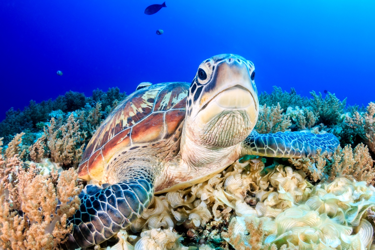 Grand-Caymen-Swim-With-Turtles