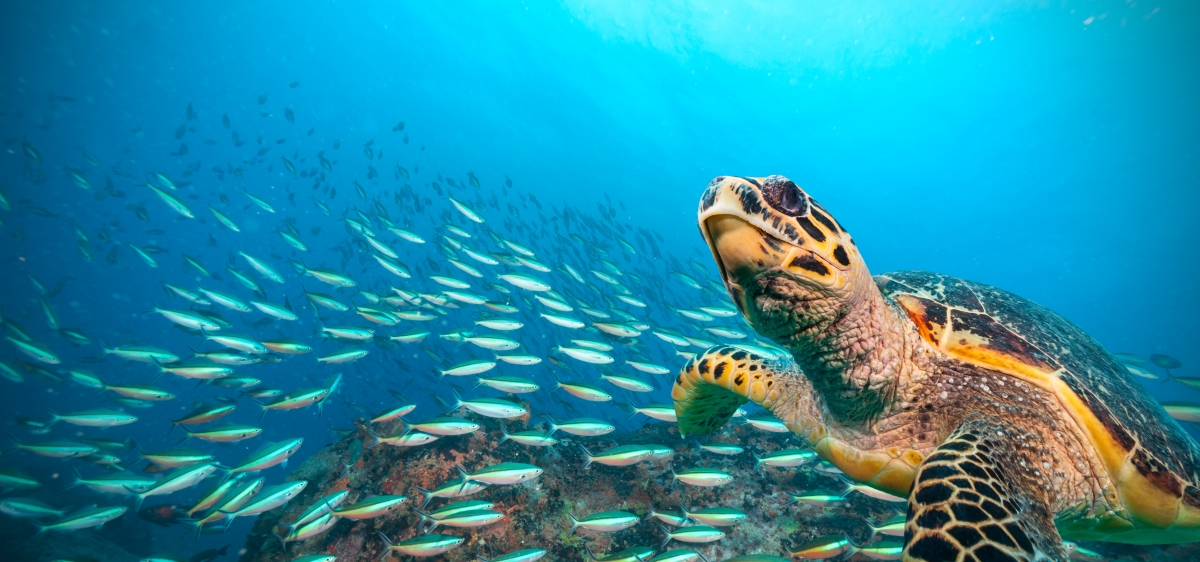 St-Lucia-Swim-With-Turtles